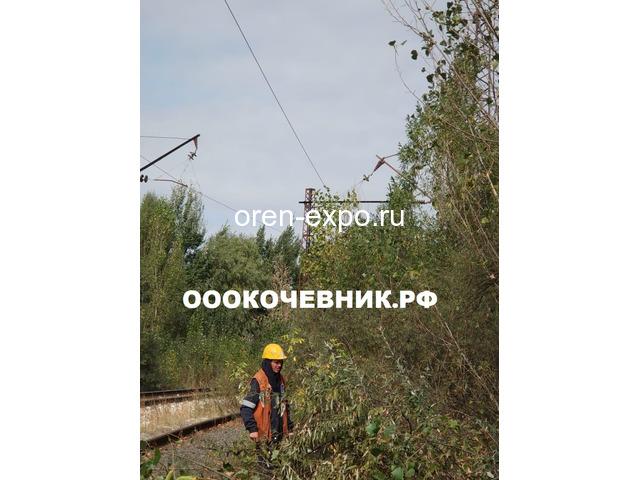 Расчистка заросших земель от кустов, деревьев, корней - 2