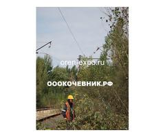 Расчистка заросших земель от кустов, деревьев, корней - Изображение 2