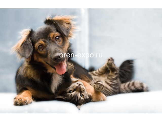 Ветеринарная вызывная служба Динго - 1